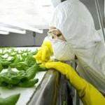 На урожаи ГМО-культур агрокорпорации зарабатывают в десять раз больше, чем тратят на семена